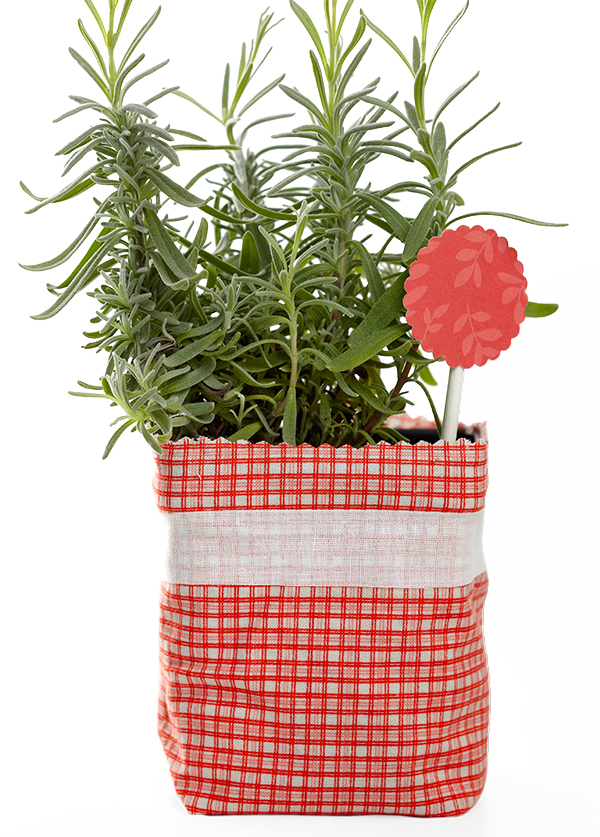 Pretty Potted Plant