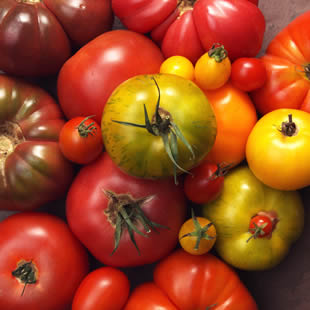 Hot Tomatoes: Eating to control blood pressure