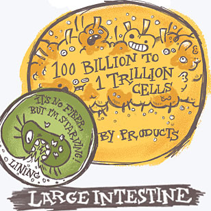 Large Intestine and Hungry Bacteria