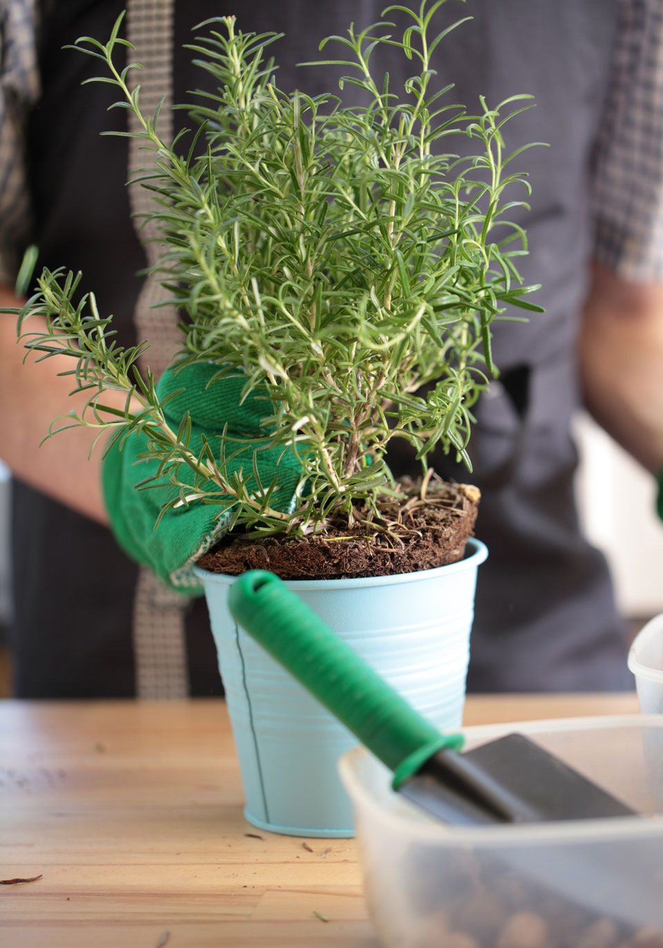 Your Ultimate Guide to Growing Herbs Indoors | EatingWell
