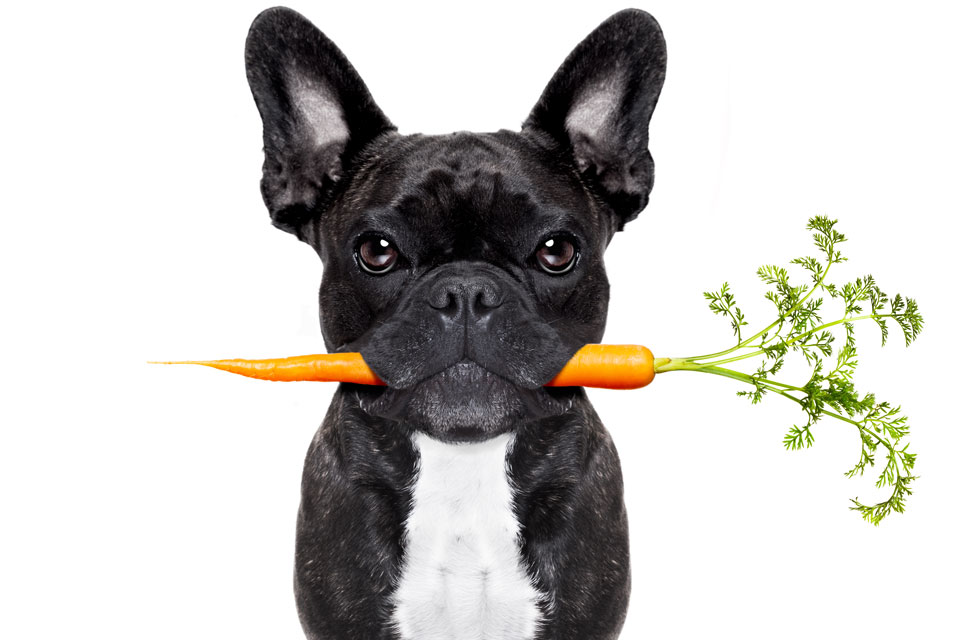 Healthy Foods to Avoid Feeding Dogs