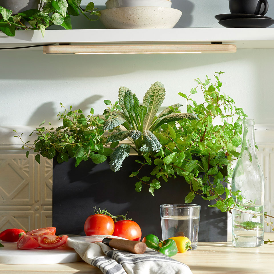 grow light in a kitchen with herbs