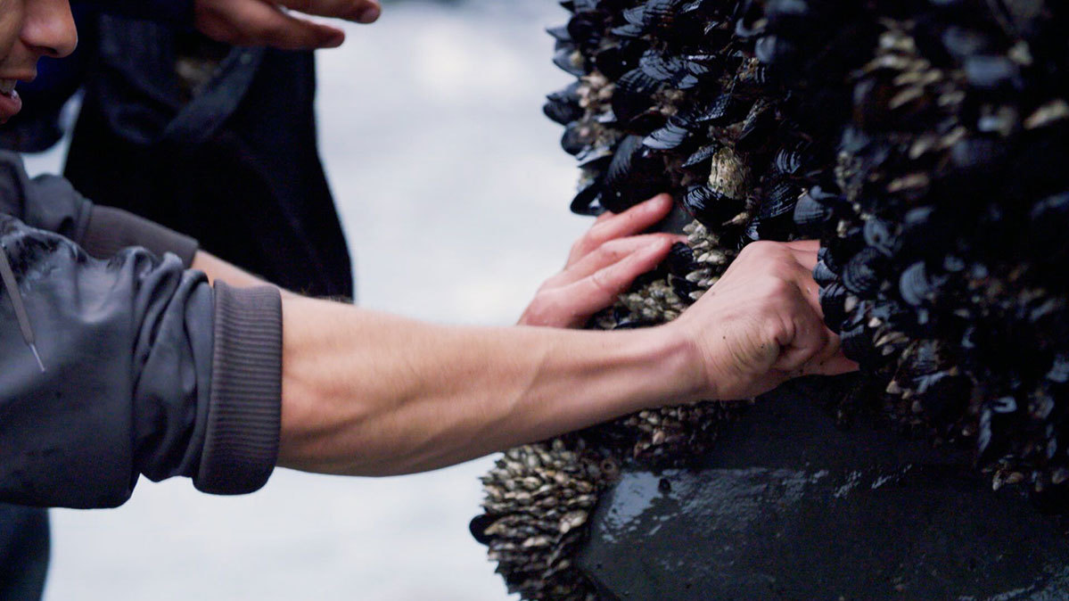 arm reaching to harvest mussels