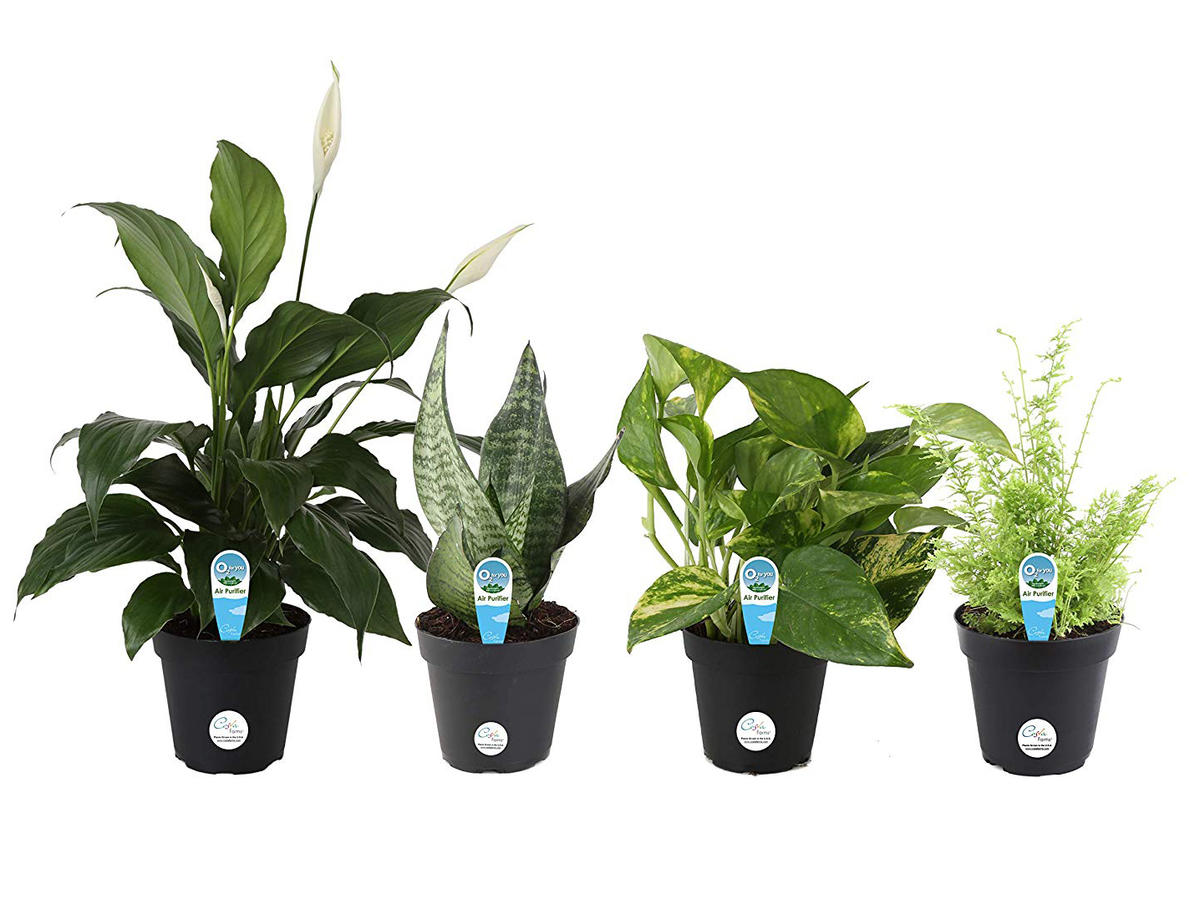 Costa Farms Clean Air O2 For You Houseplant Set