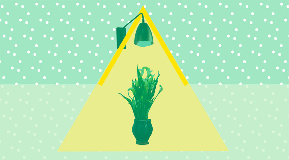 bright illustration of a lamp shining on a plant