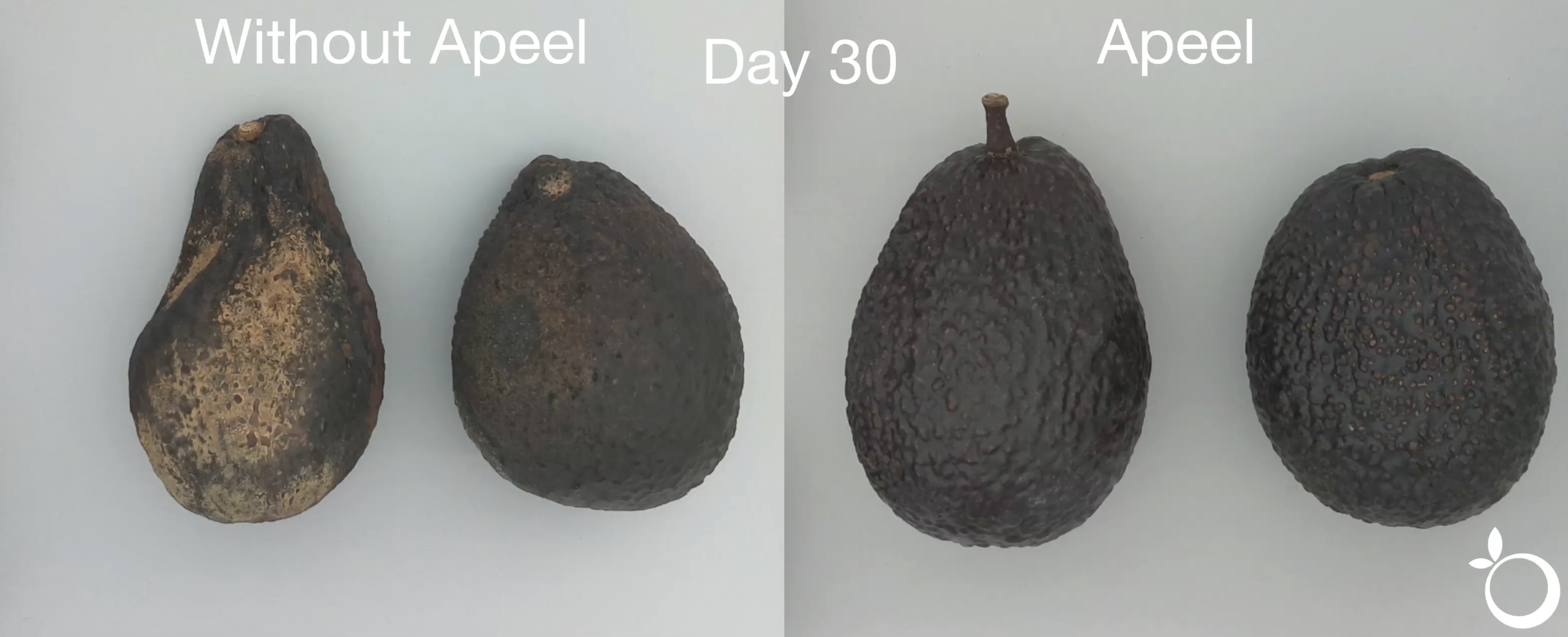 avocados on grey background. On the left they are untreated and starting to rot, on the right treated with Apeel.