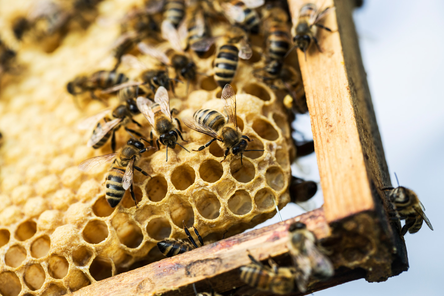 Bees Are Dying Off in Record Numbers: What Can We Do About It?