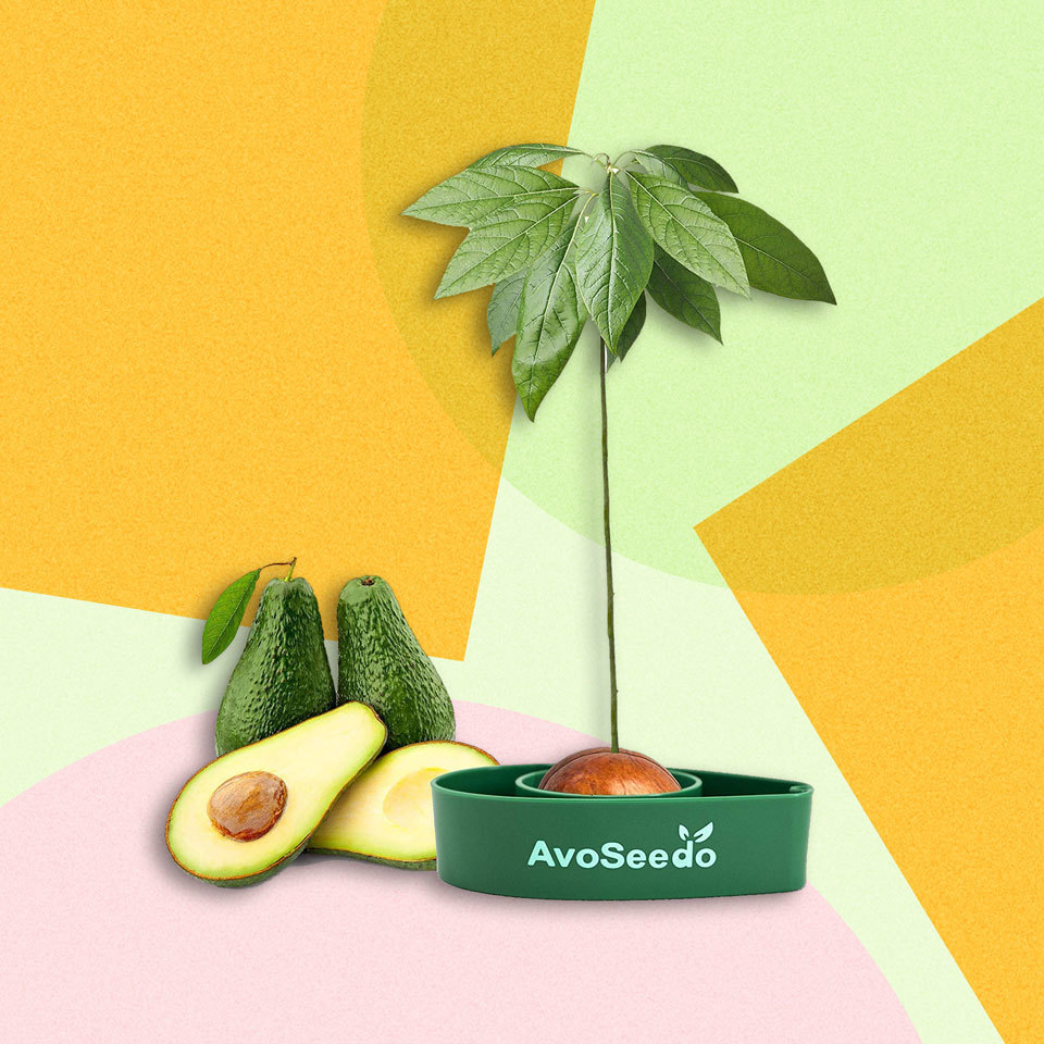 You Can Grow Your Own Indoor Avocado Tree for $11, Thanks to Amazon