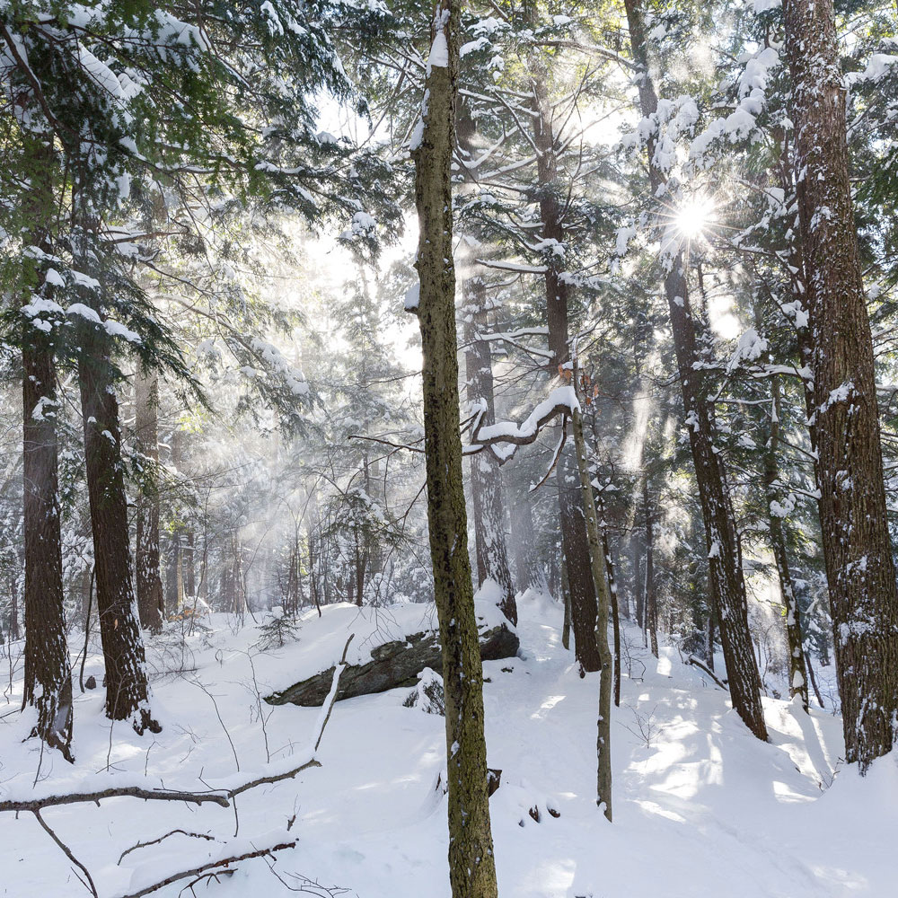 It's Official: Winter 2020 Will Be Frosty and Frigid, According to the Farmers' Almanac