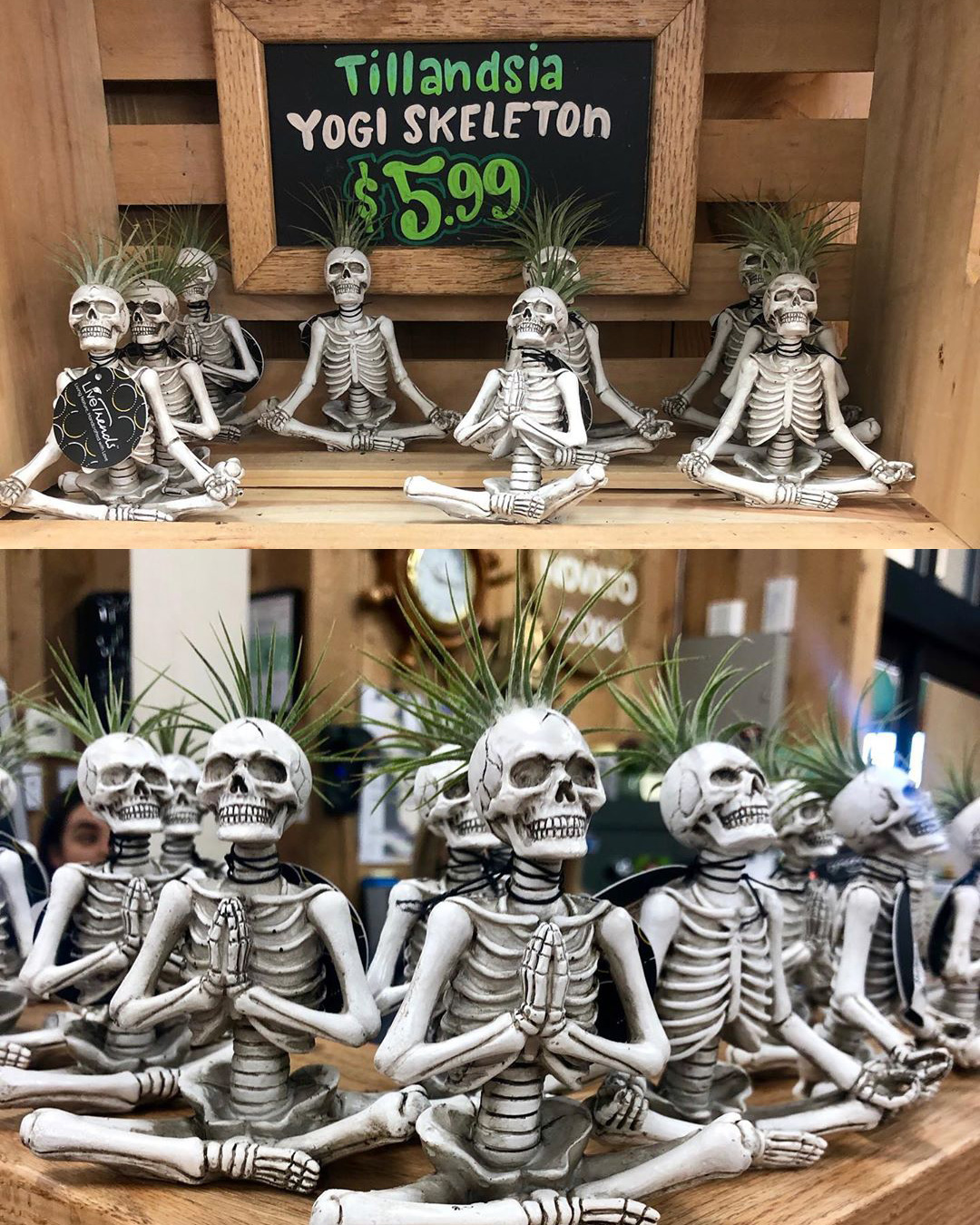 skeleton sculptures with air plants in the top of their heads