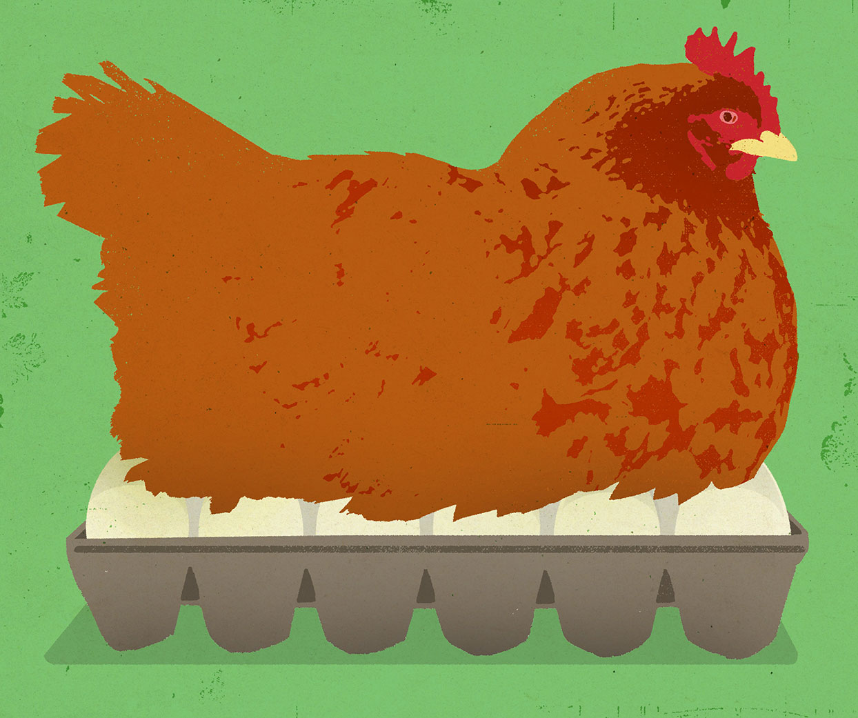 Illustration of a hen sitting on a crate of eggs