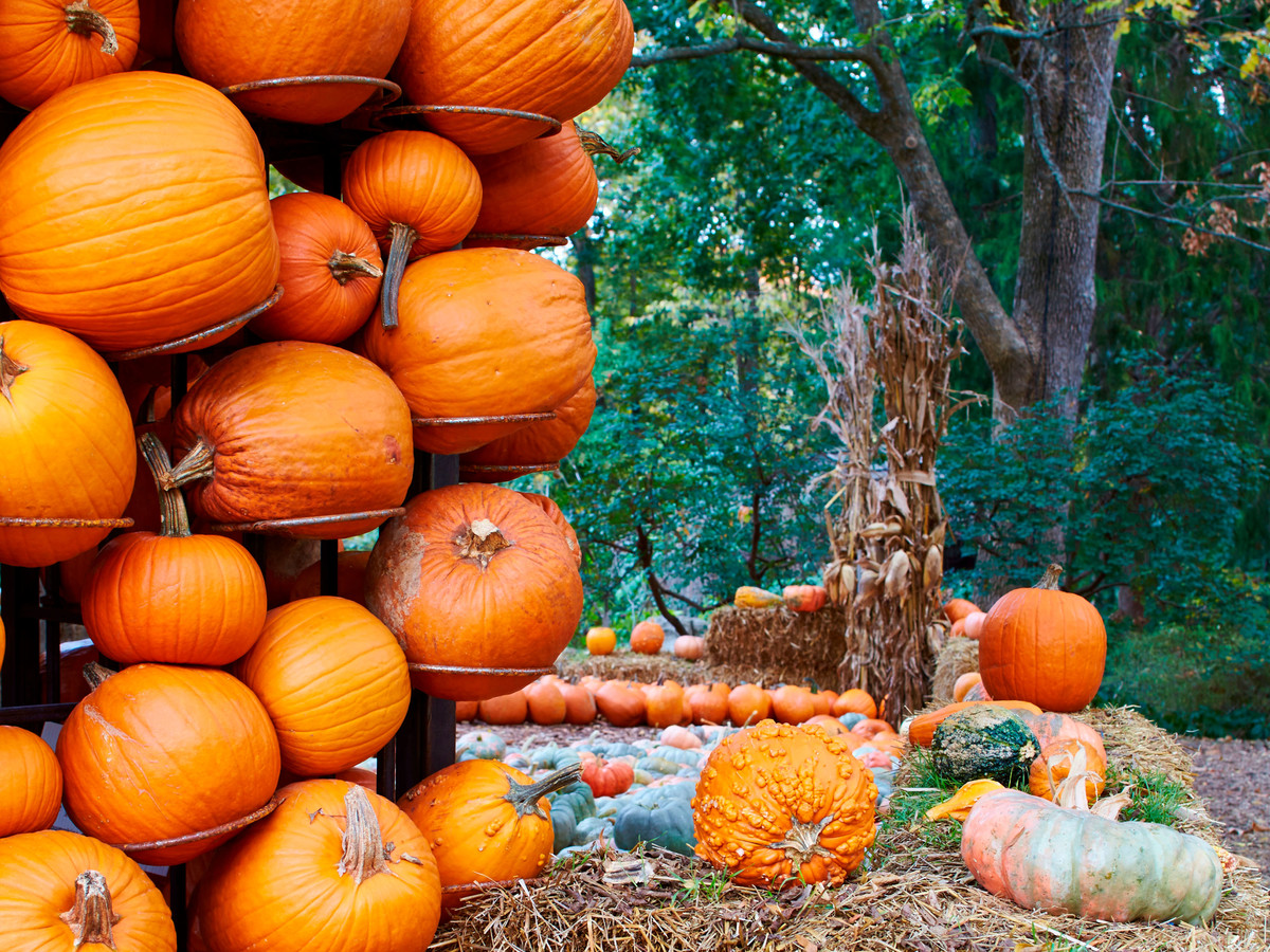 Pumpkins hanging from walls of a small hut