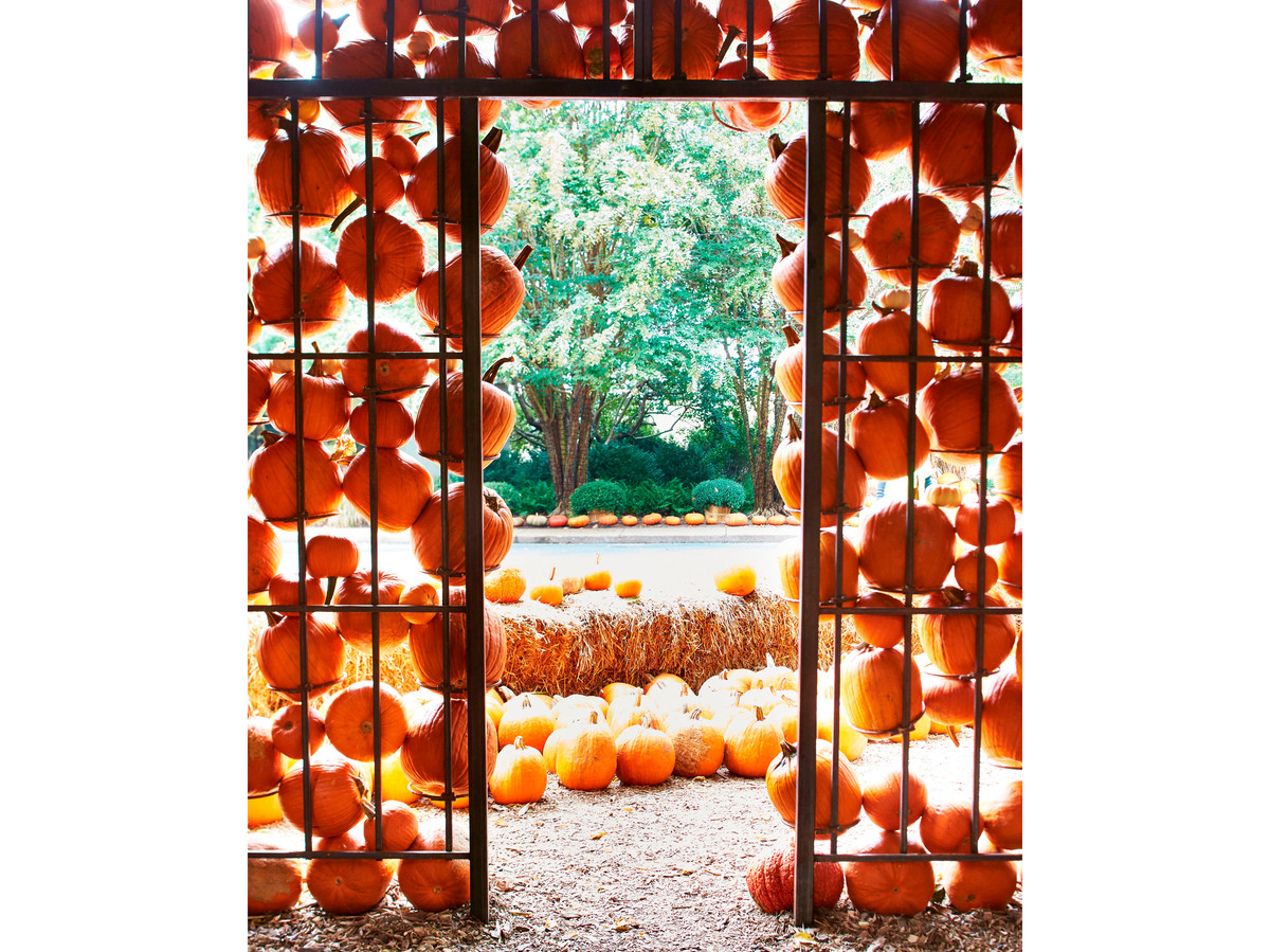 Looking out the door from inside a hut covered in pumpkins