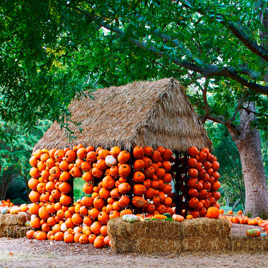 How Cheekwood's Incredible Pumpkin Display Comes to Life