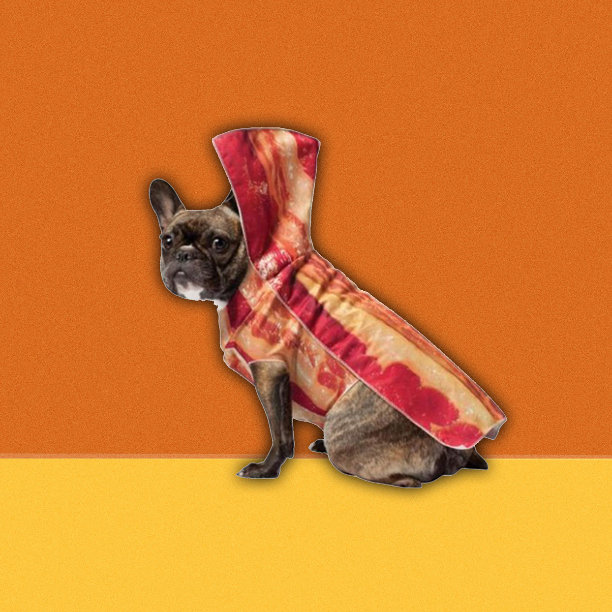 dog in a bacon costume
