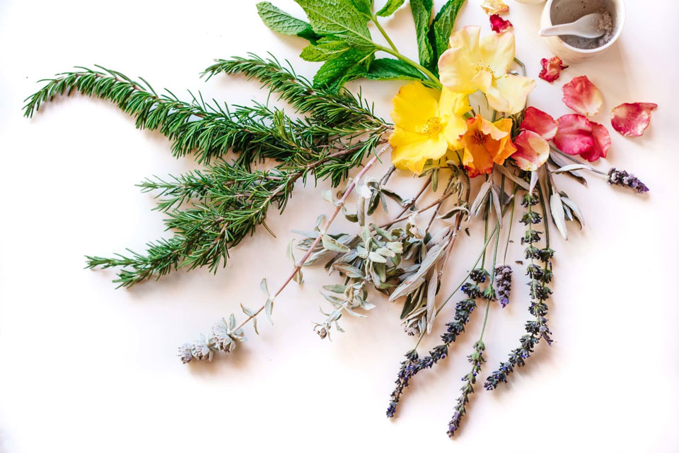 various flowers and herbs
