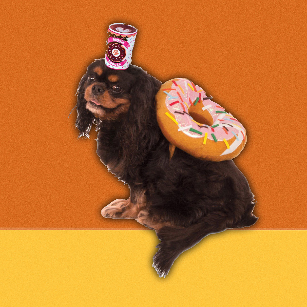 dog wearing donut and coffee costume