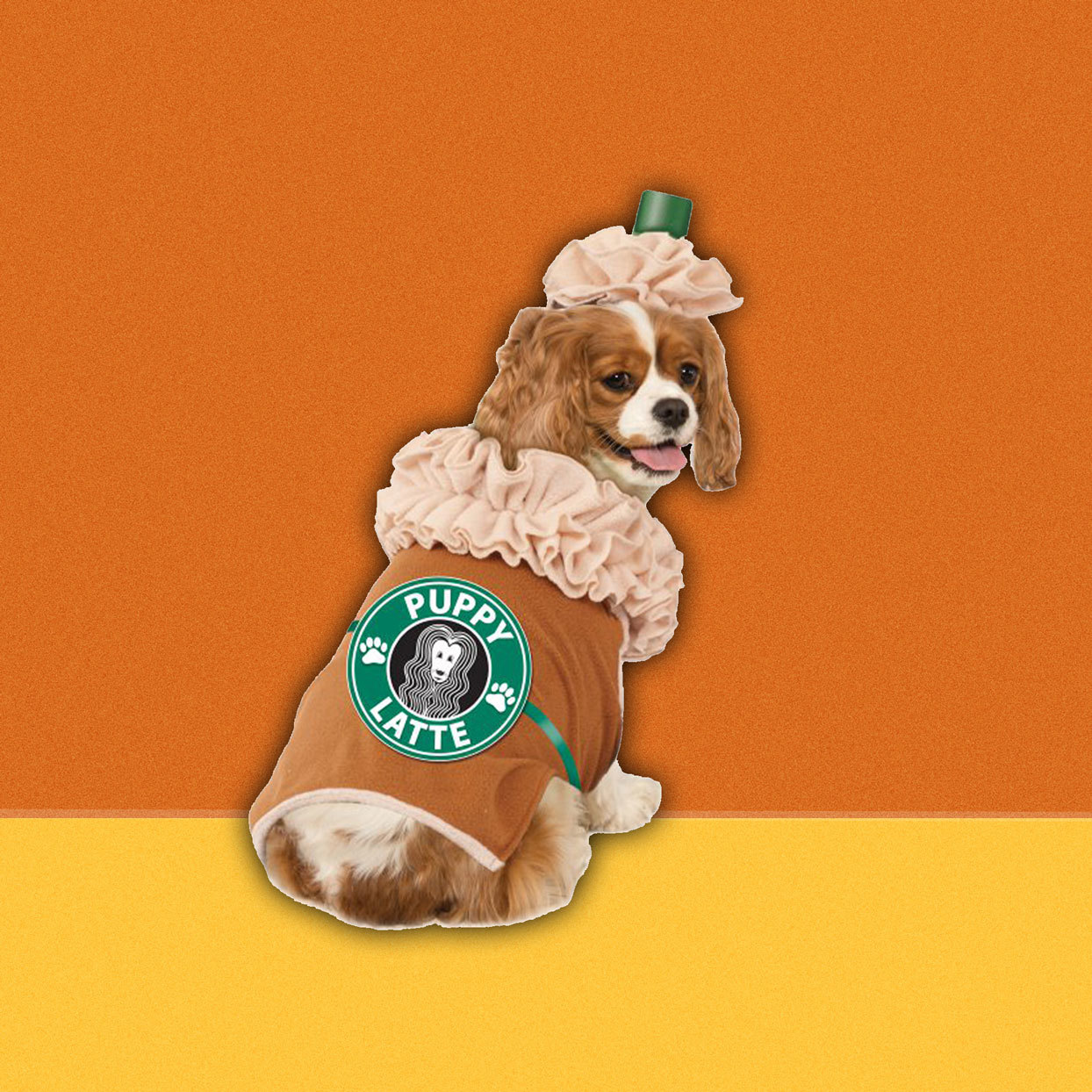 "dog in a ""Puppy Latte"" costume"