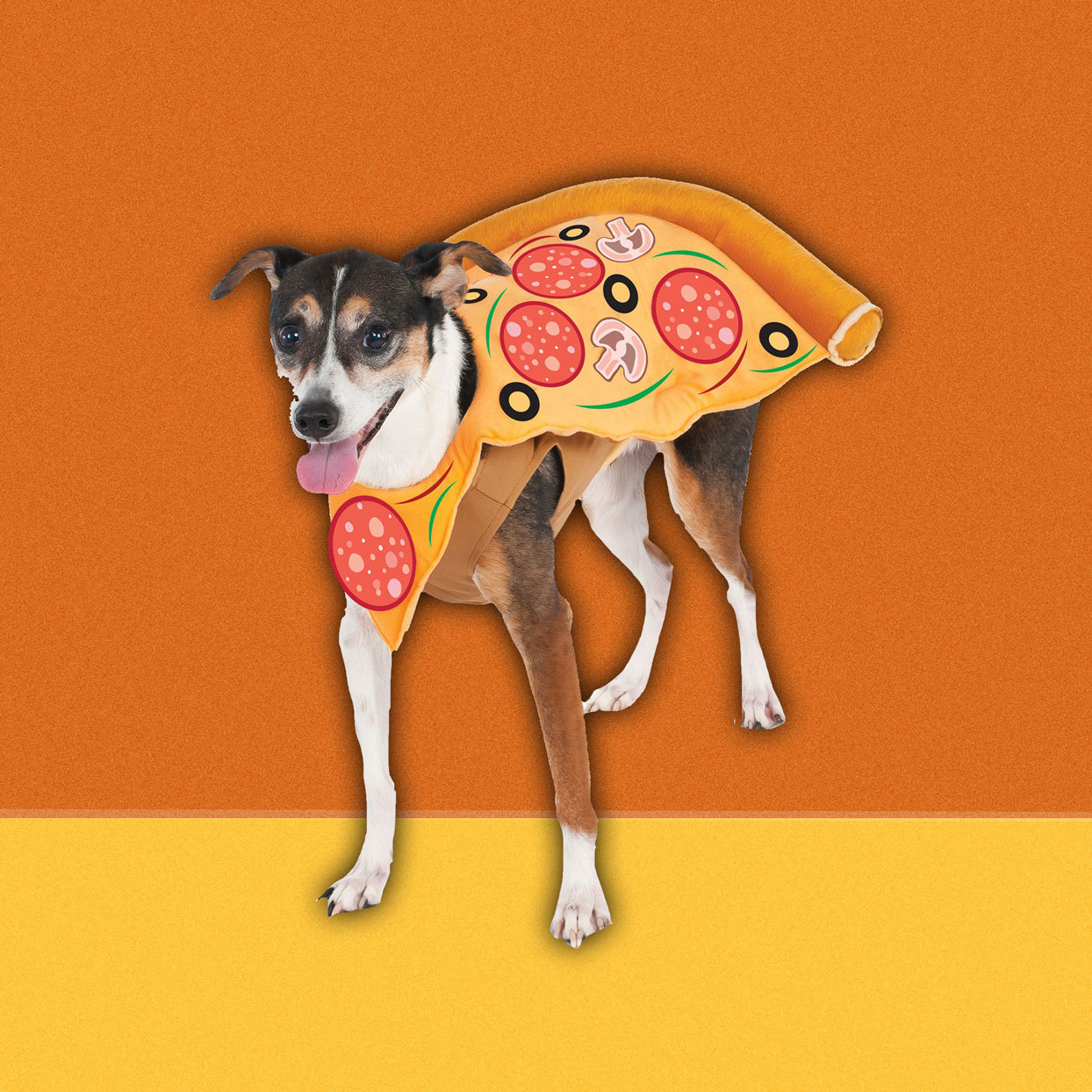 "You thought your dog was cute, but they will be even cuter dressed as a piping hot slice of pizza. Topped with pepperoni, mushrooms, olives and bell peppers, this will be one ""supreme"" Halloween pup.$20.04"