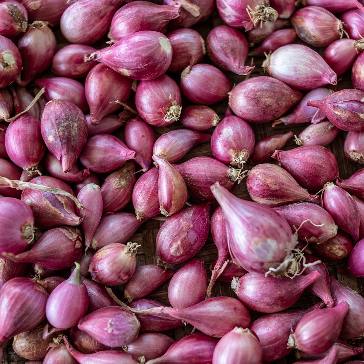 What Are Shallots and What Can I Do with Them?