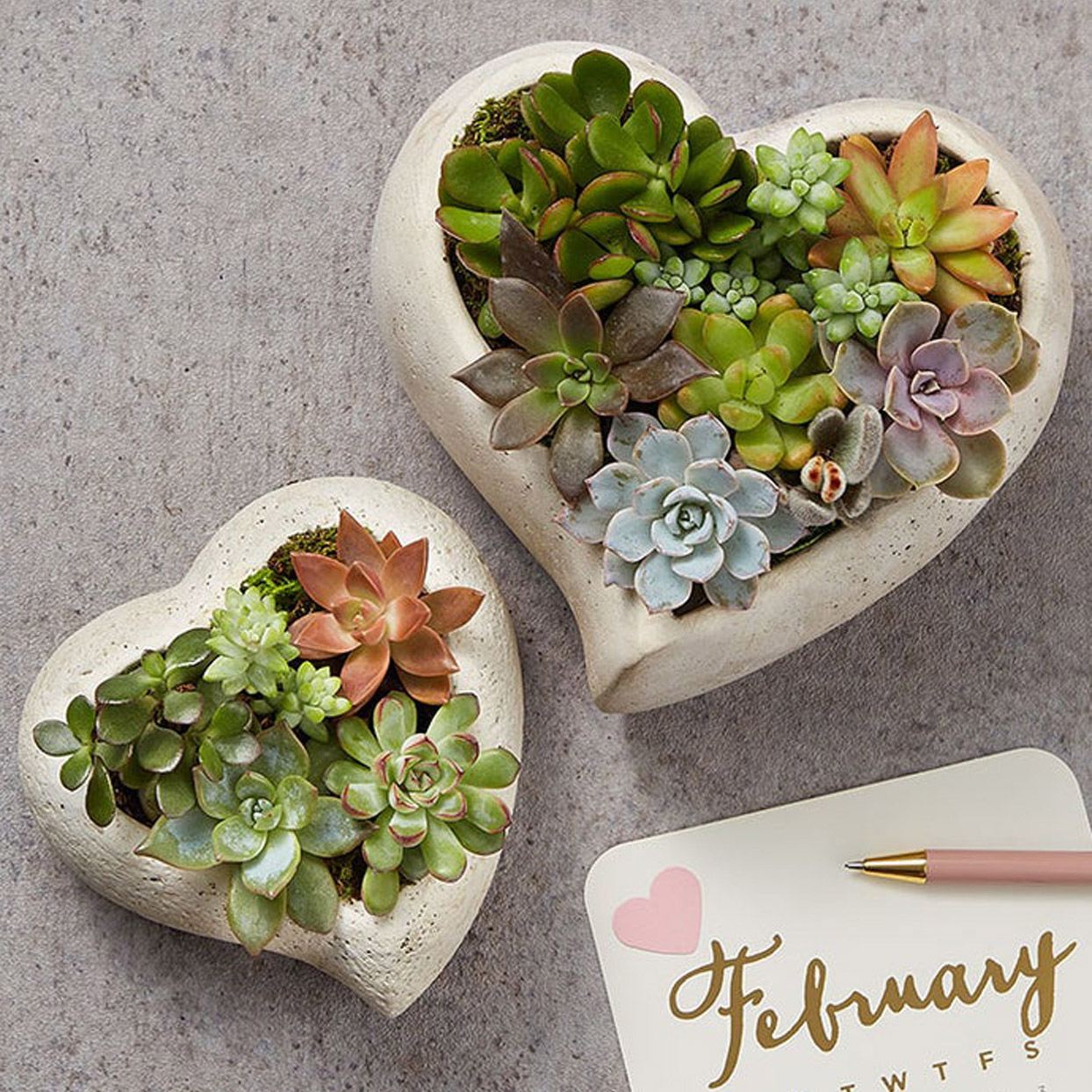 This Heart-Shaped Succulent Garden Is the Cutest Valentine's Gift