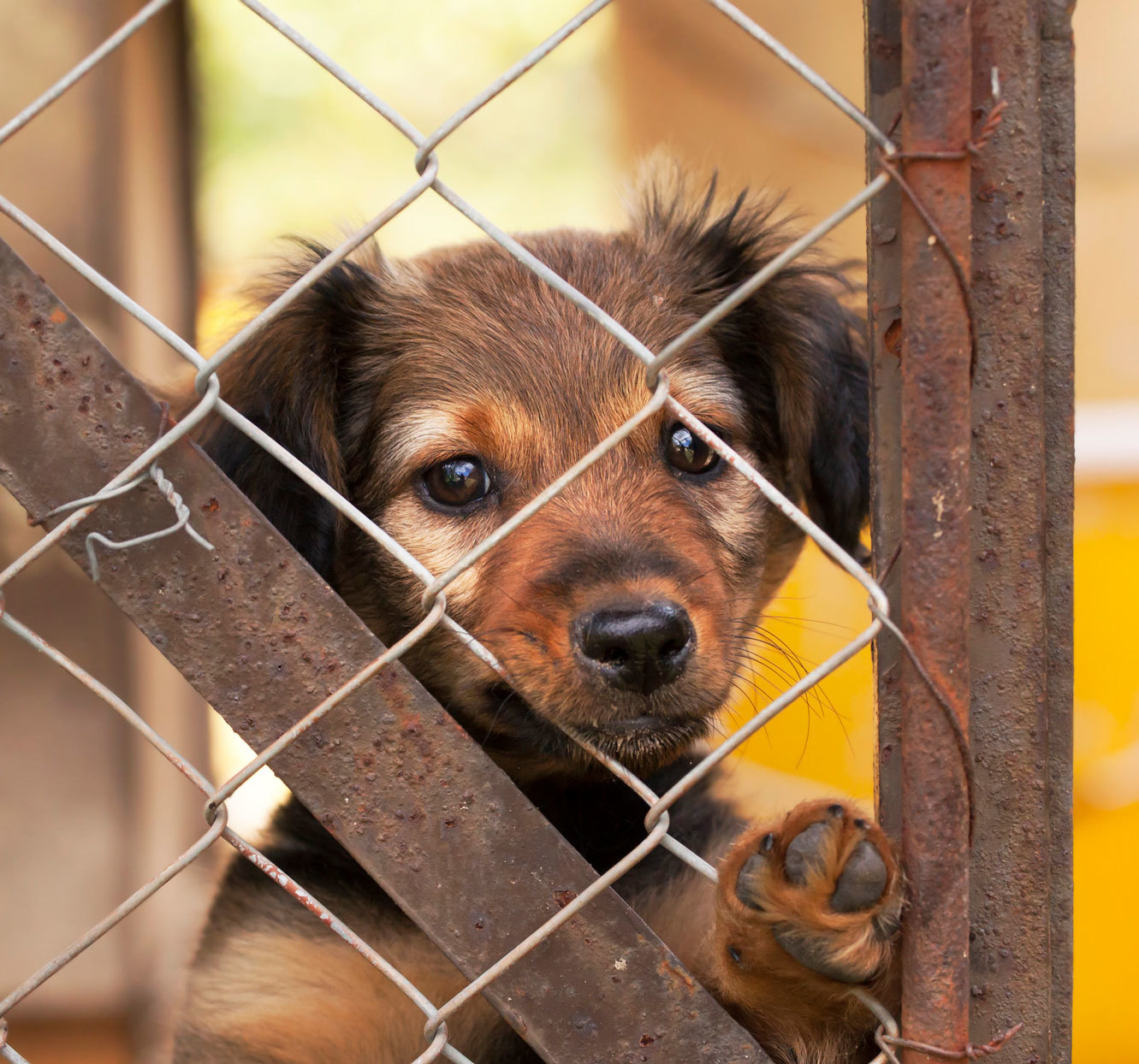 Feeling Lonely? There's Never Been a Better Time to Foster or Adopt a Pet