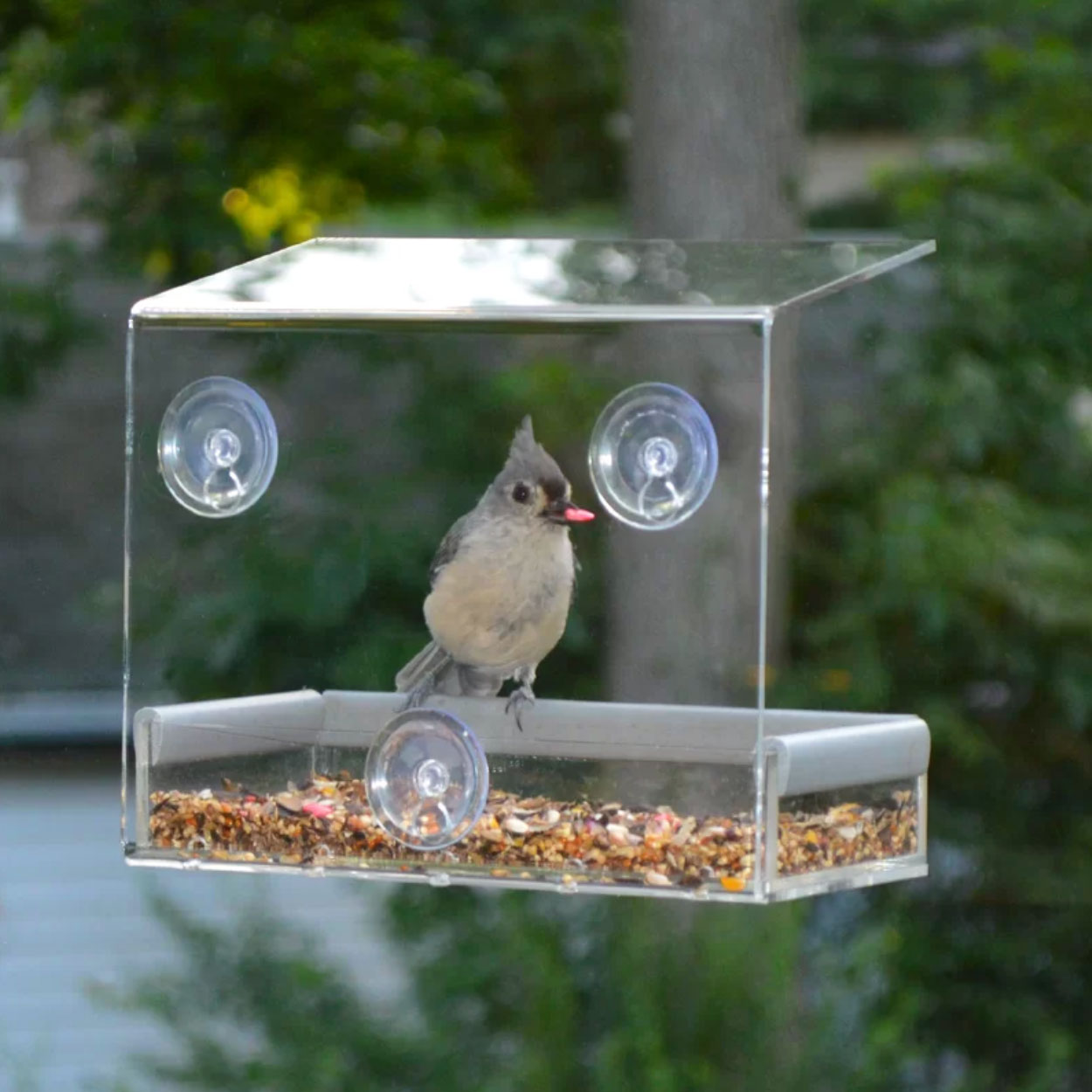 This Clear, Window-Mounted Bird Feeder Makes Staying at Home So Much More Entertaining