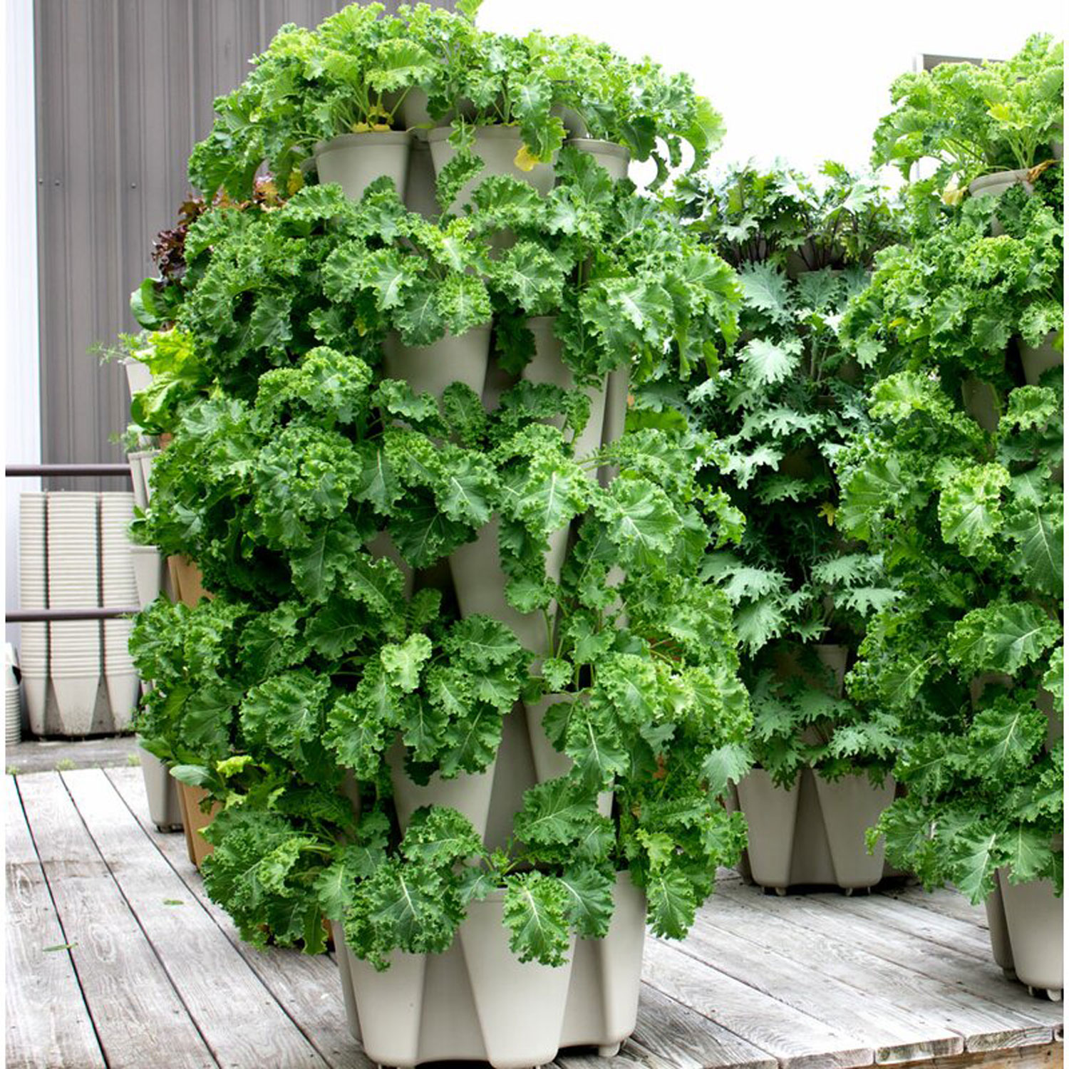How to Start a Vertical Garden  EatingWell