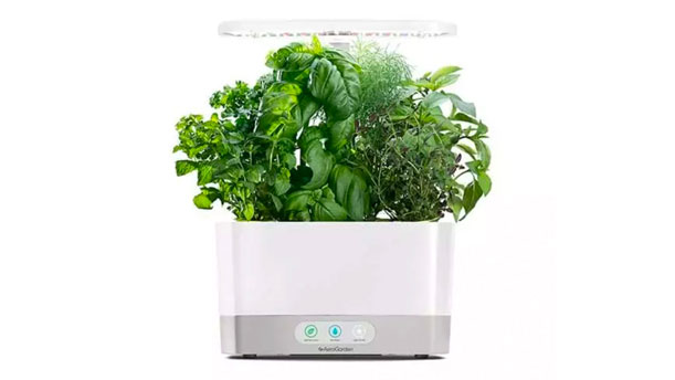 This Foolproof Indoor Garden Is the Easiest Way to Grow Your Own Food