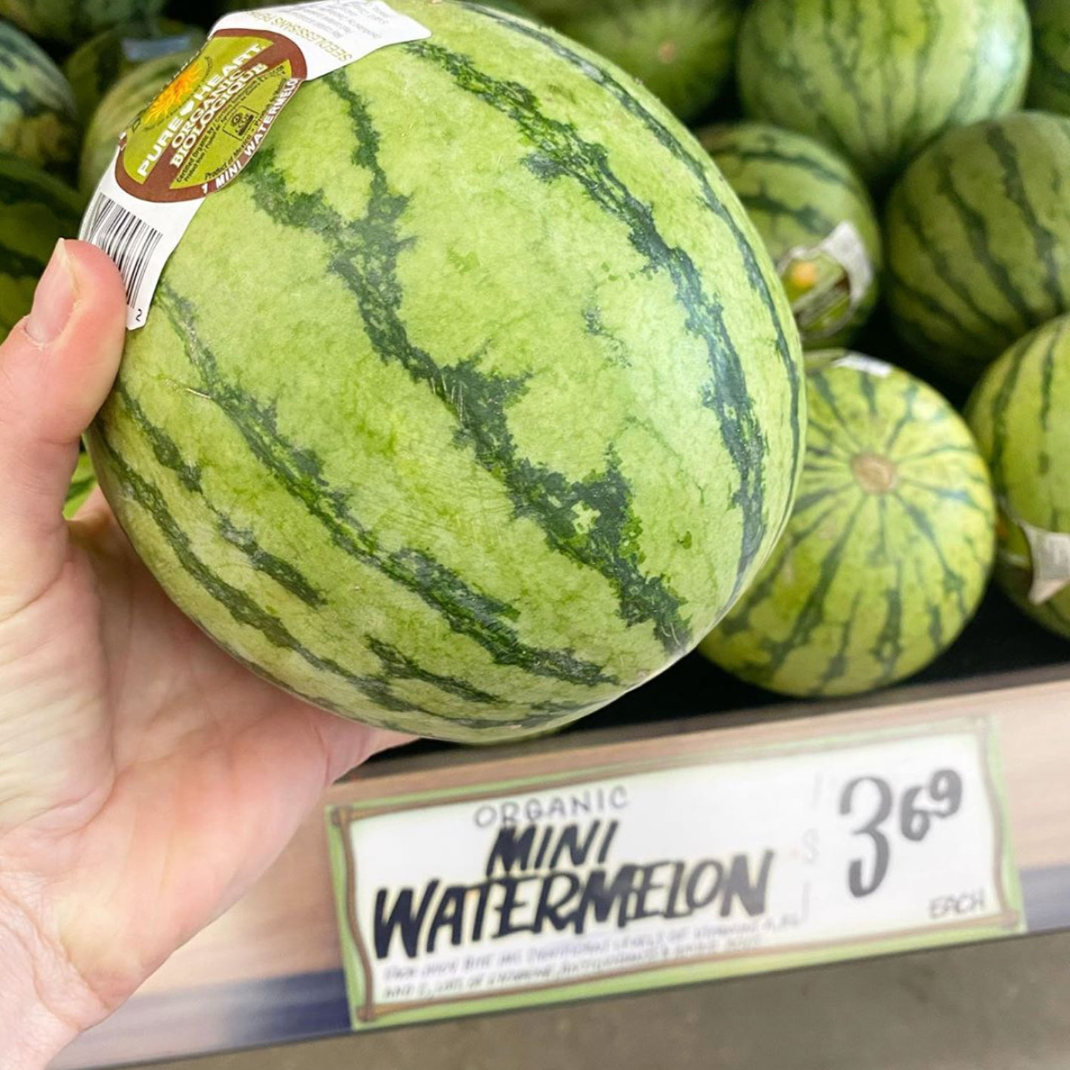Trader Joe's Mini Watermelons Will Make Your Summer Sweeter