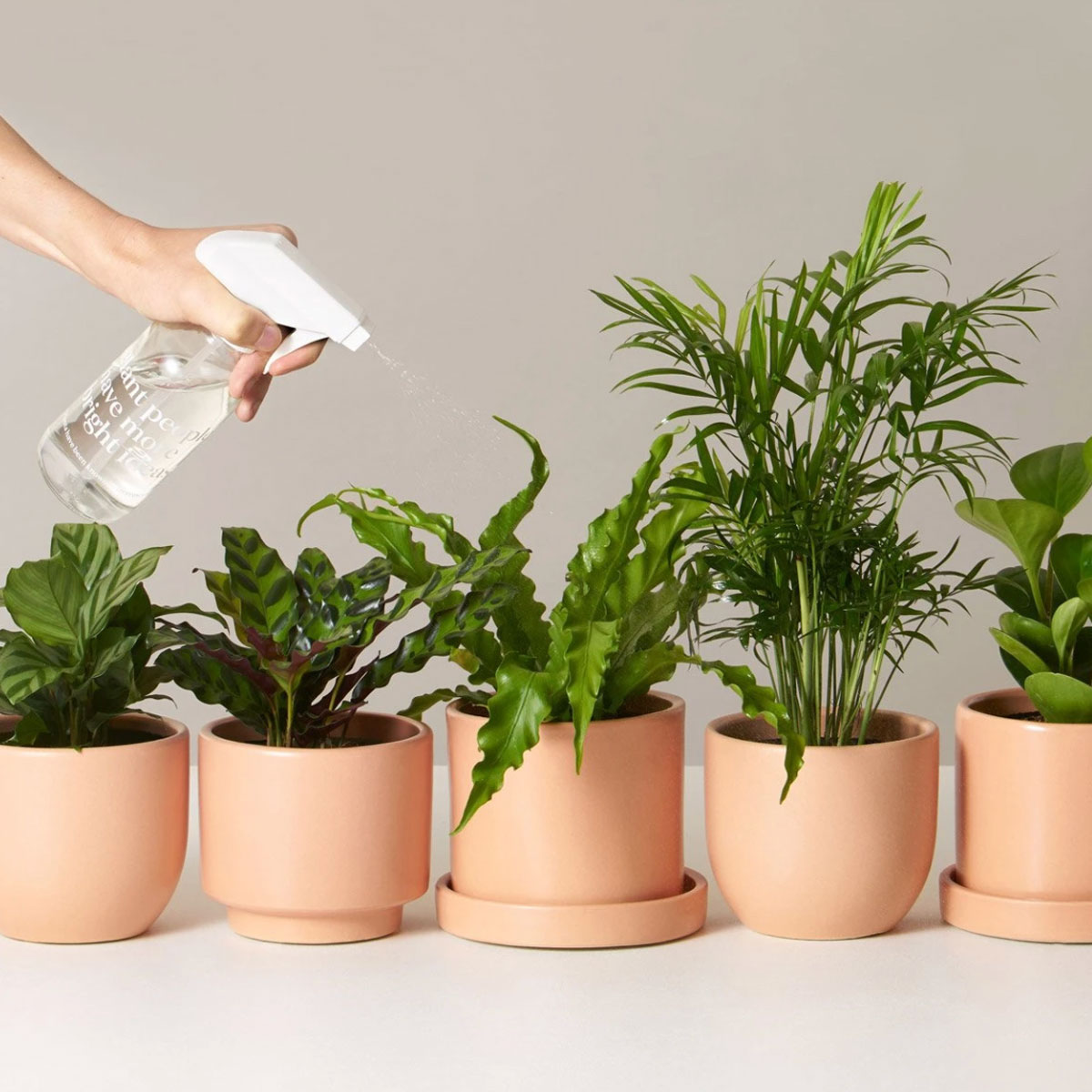 This Monthly Plant Subscription Will Help You Turn Your Home Into a Green Oasis