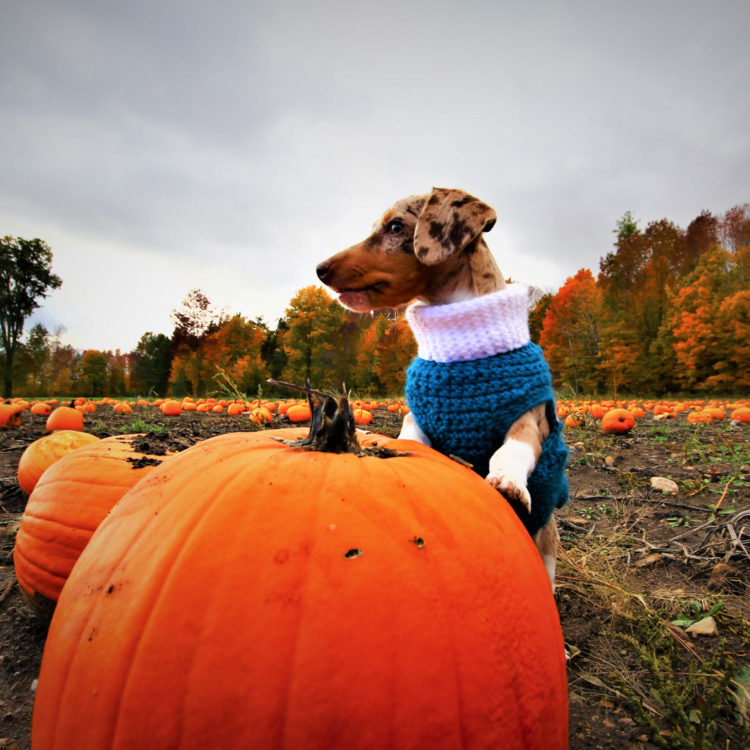 The #1 Fall Food to Feed Your Dog, According to Veterinarians