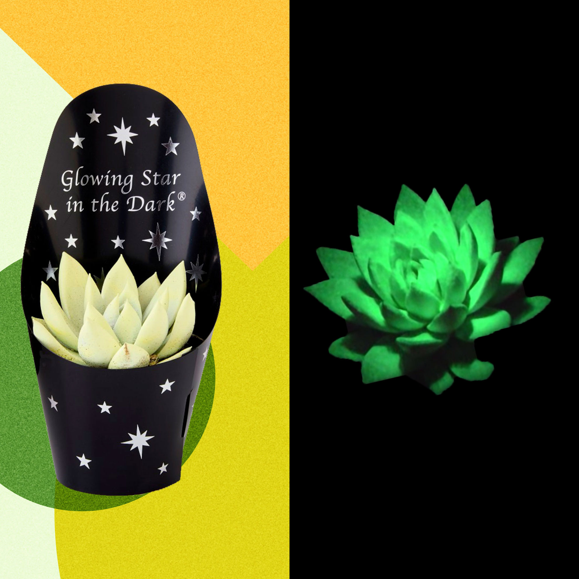These Glow-in-the-Dark Succulents Cost Just $6 at Aldi
