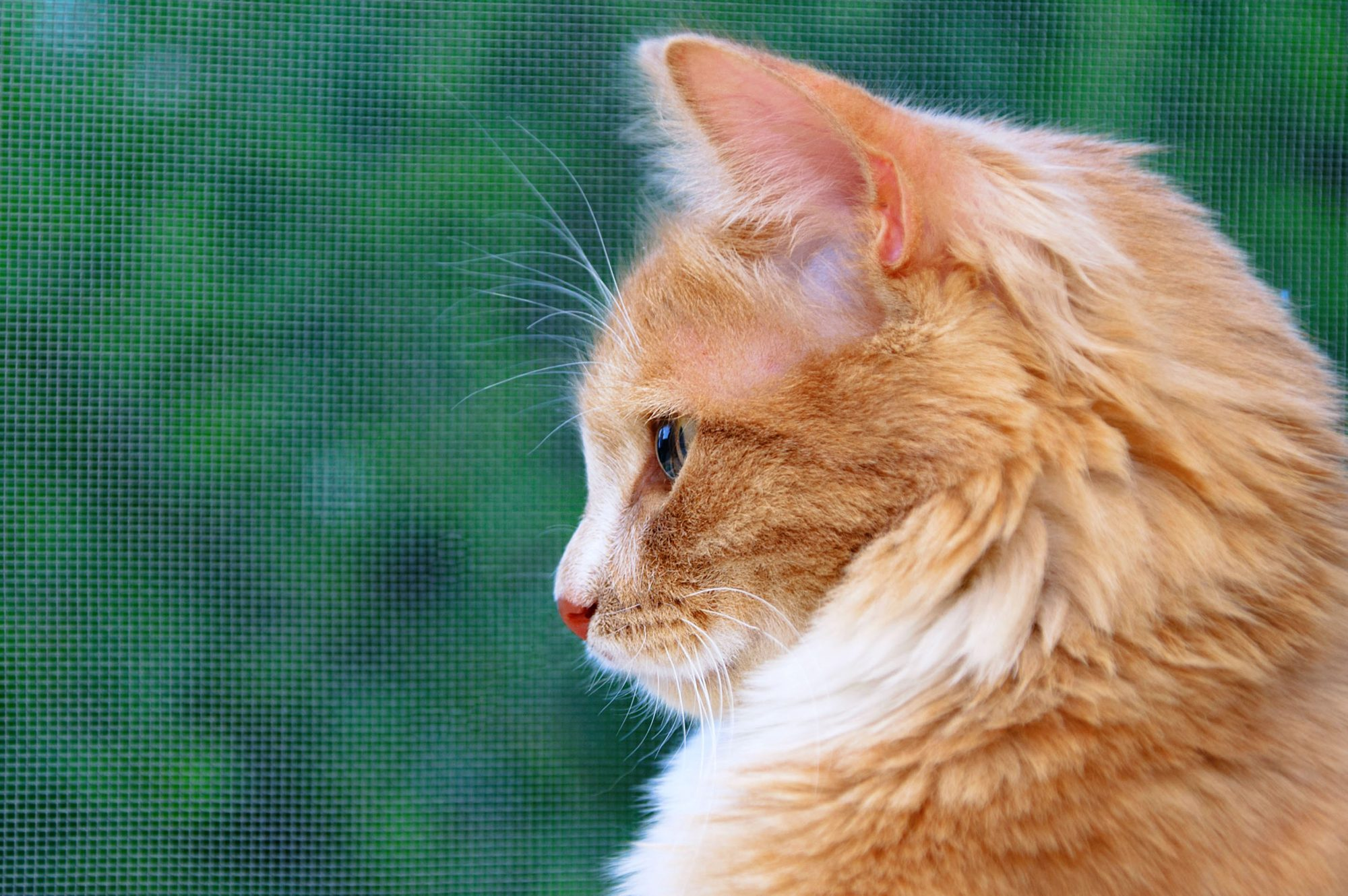 Orange Cat Names 150 Best Picks For Your Ginger Kitty Daily Paws