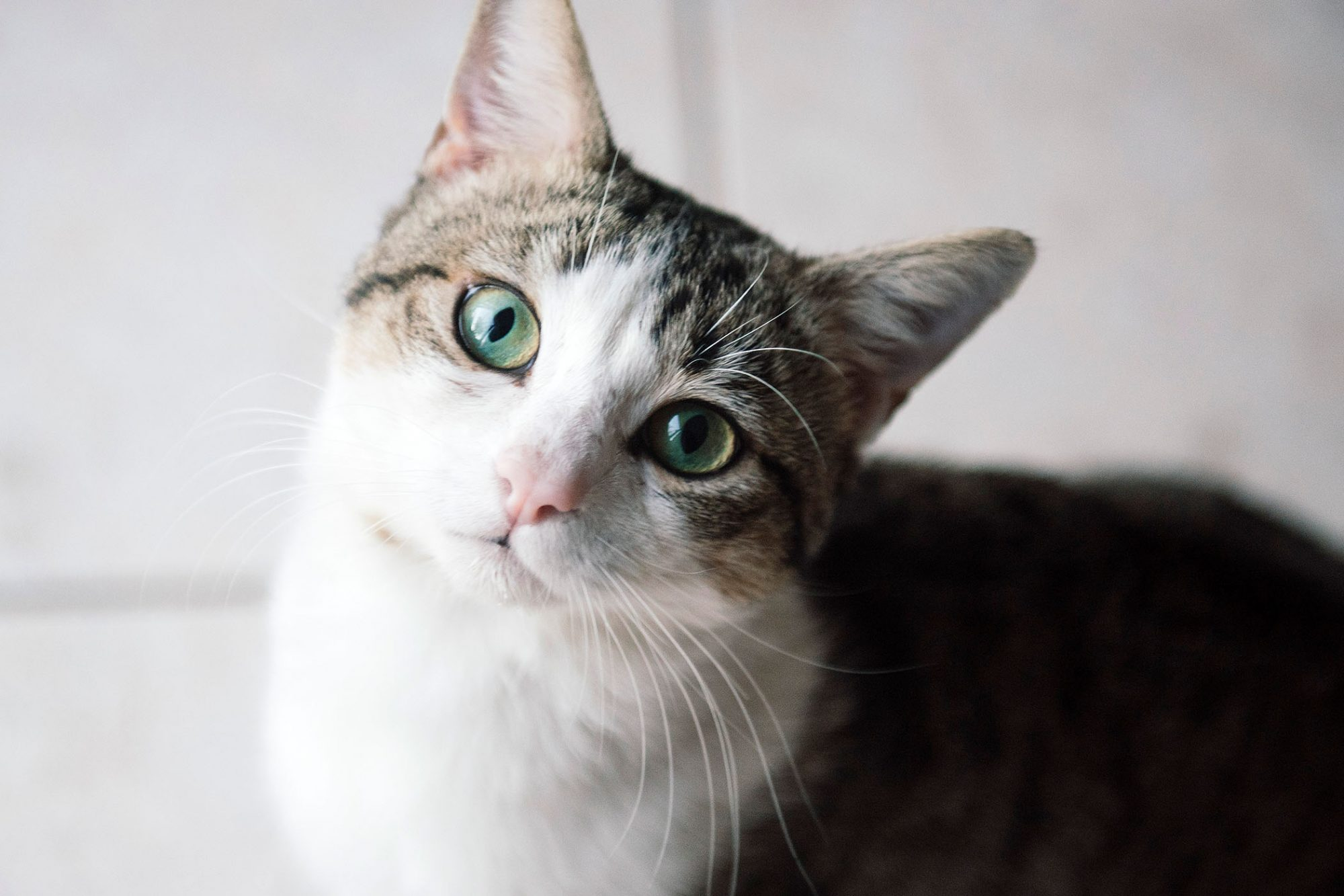 Signs Your Cat May Have An Eye Infection Causes Symptoms Treatment Prevention Daily Paws