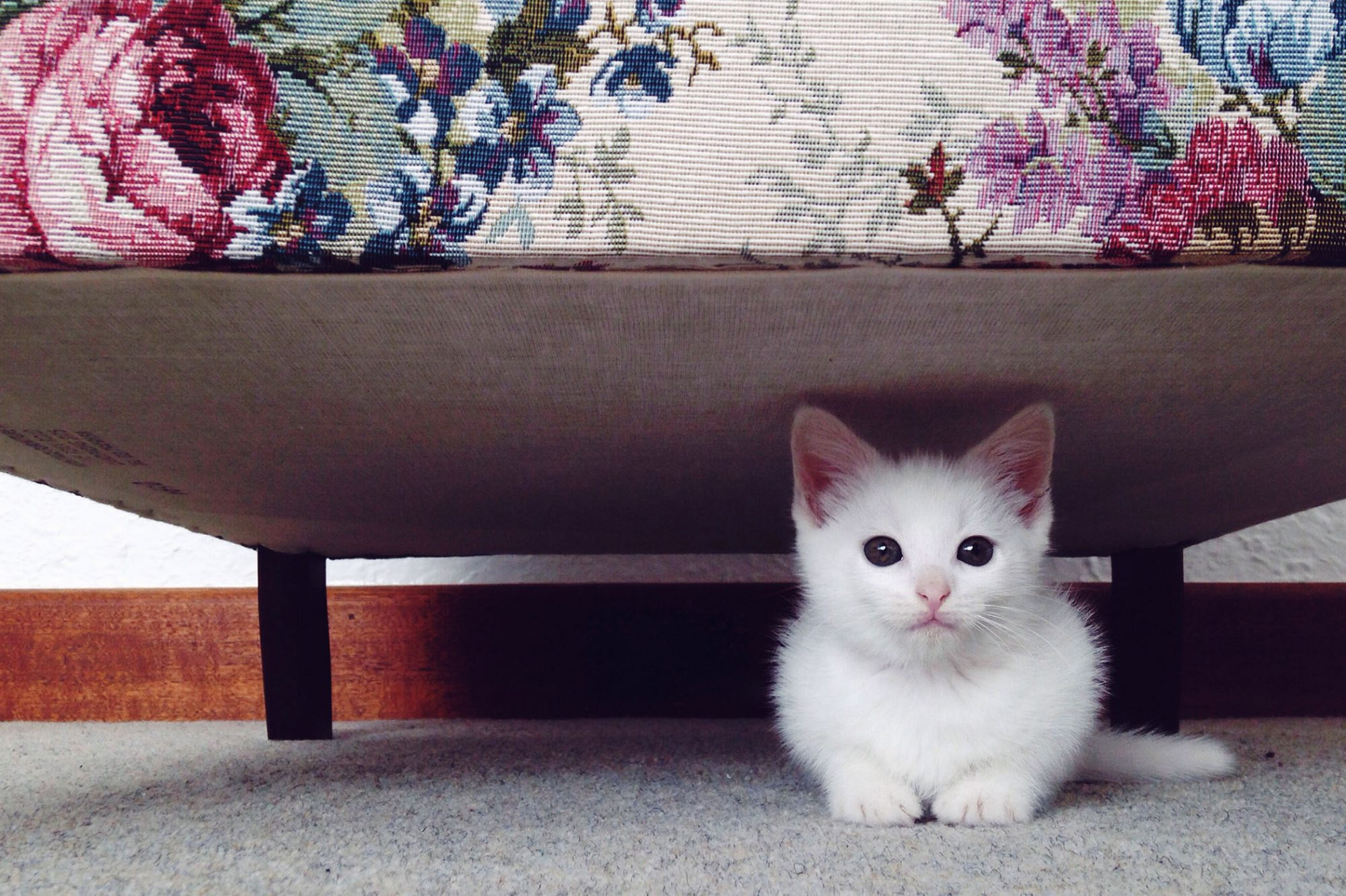 How To Find A Lost Cat Search Tips From An Expert Cat Finder Daily Paws
