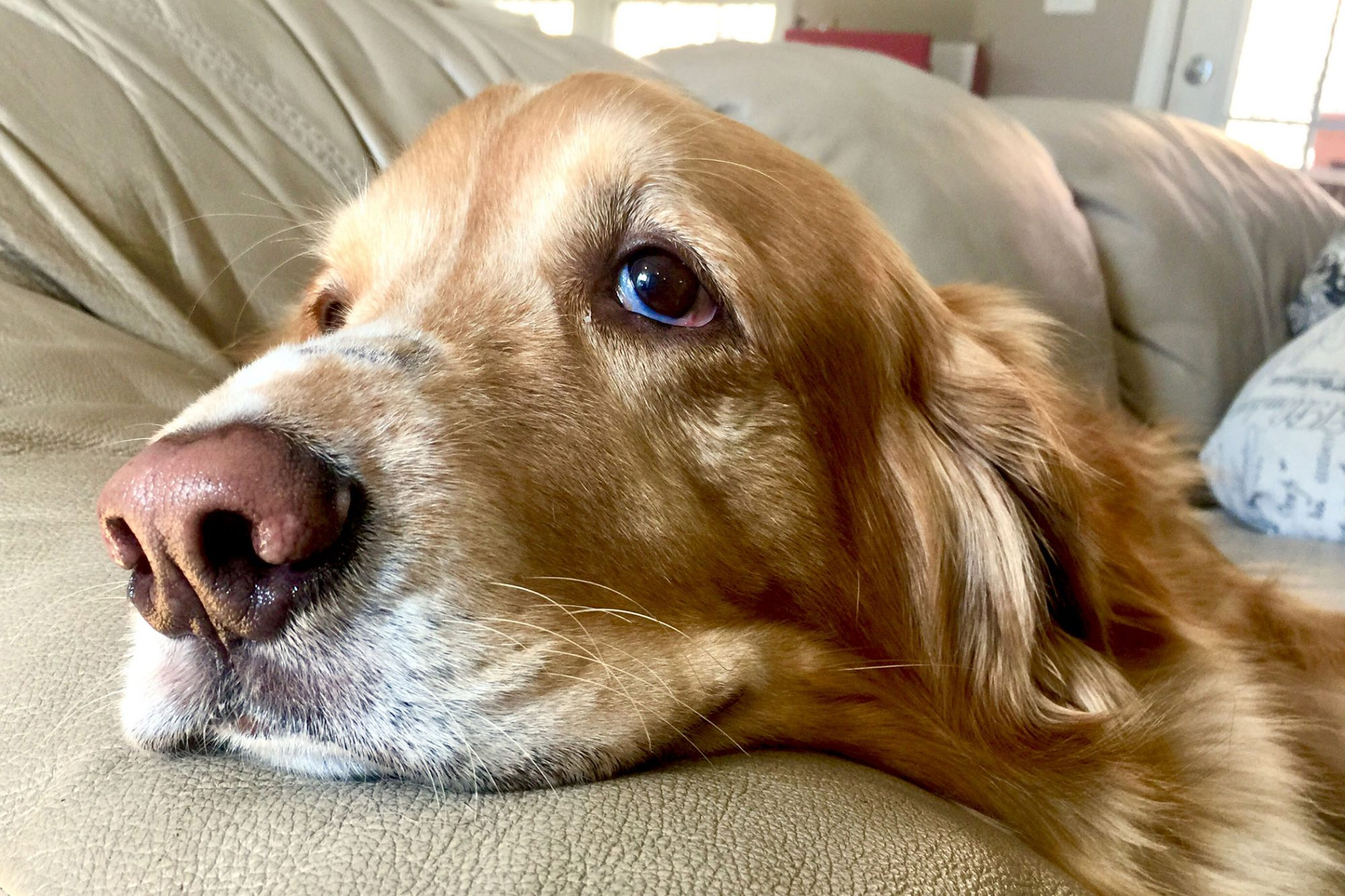 How To Identify Treat Prevent Skin Cancer In Dogs Daily Paws