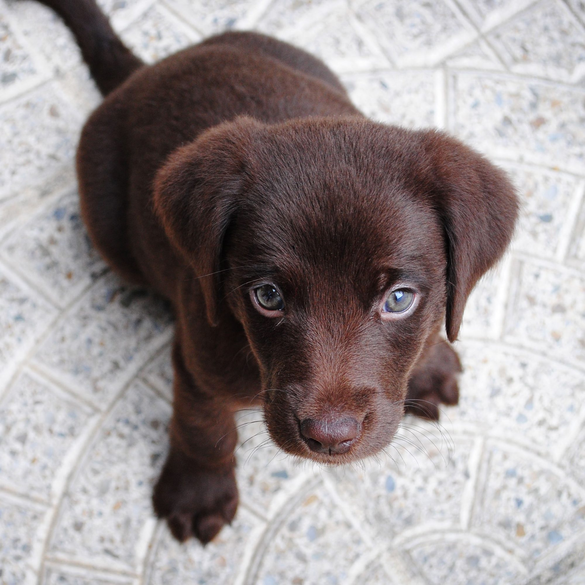 Top 15 Ways A Pet Dog Improves Your Health And Fitness Daily Paws