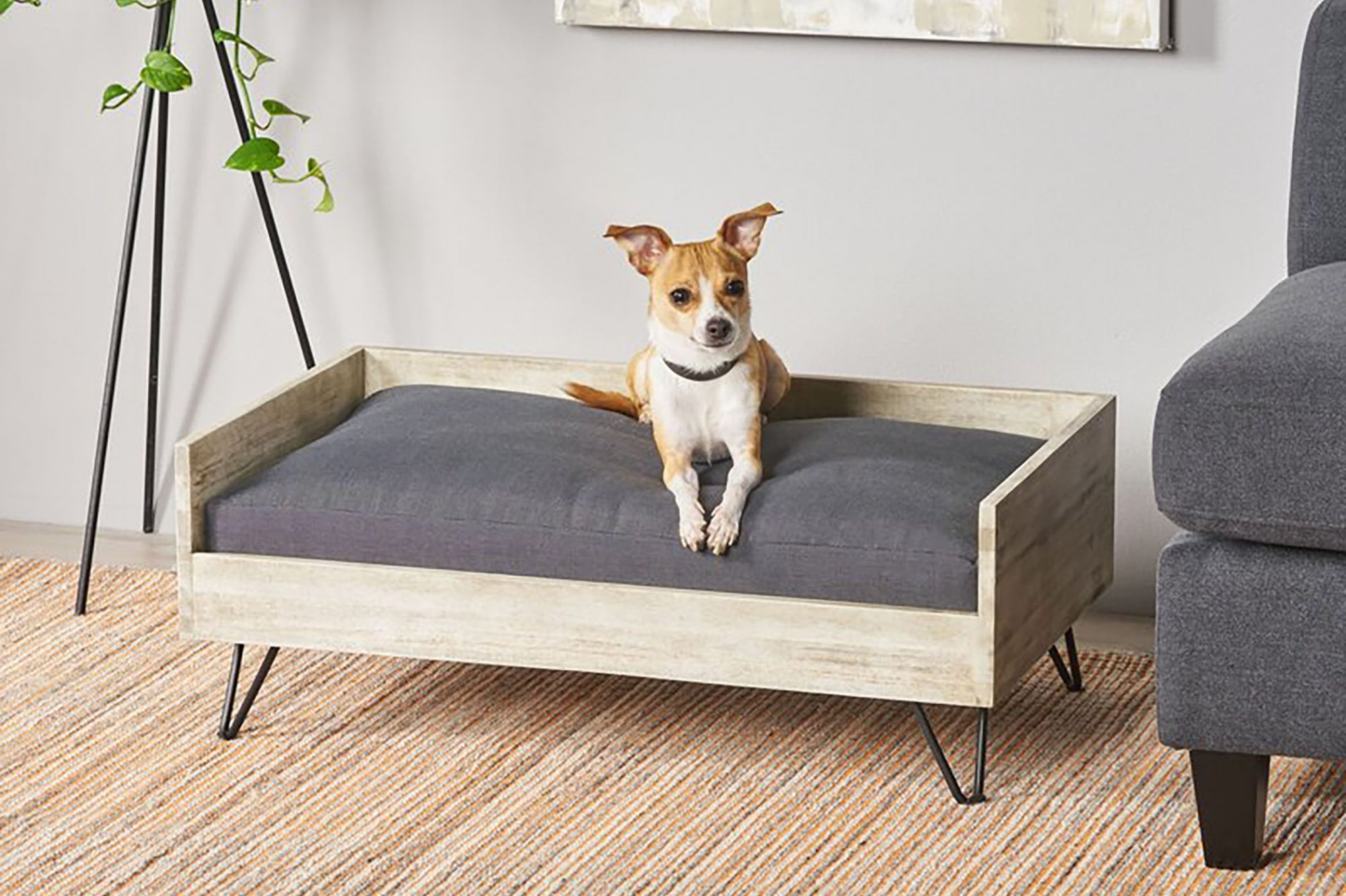 8 Best Modern Dog Furniture Pieces Daily Paws
