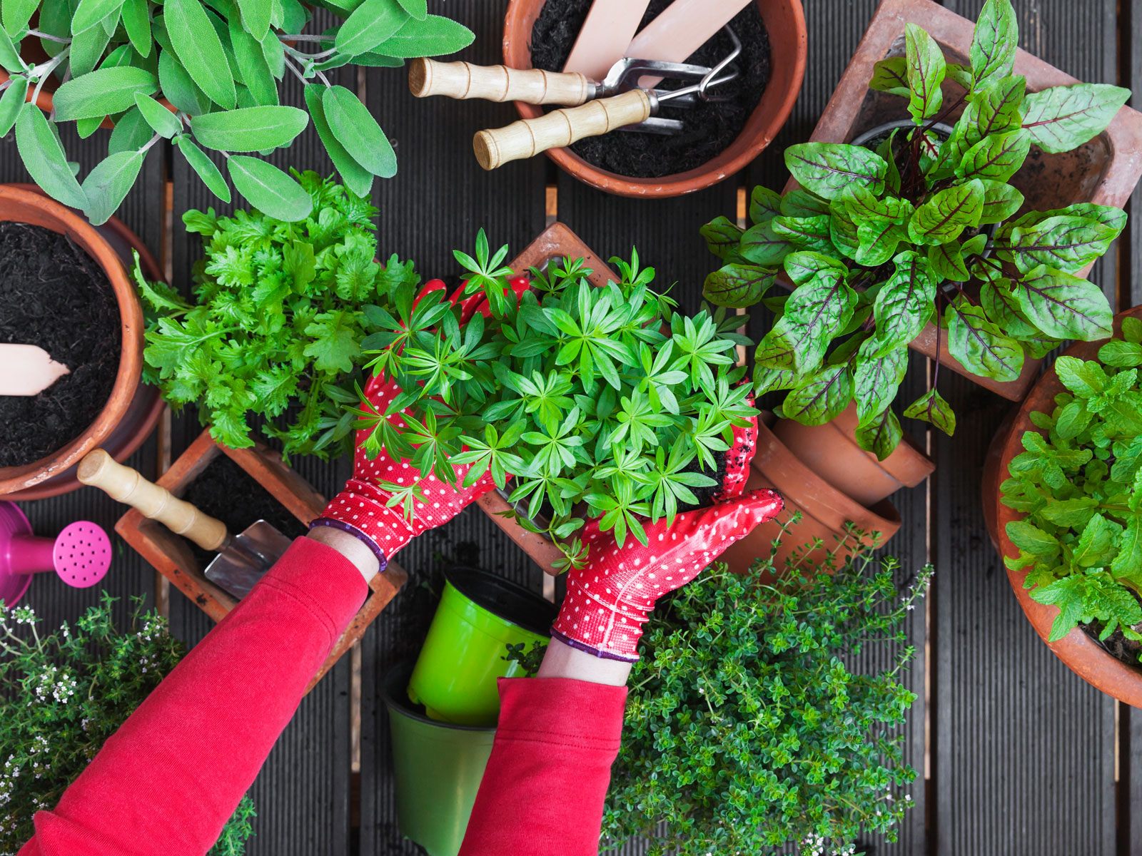 10 Tools You Need to Tend Your Organic Vegetable Garden | Food & Wine